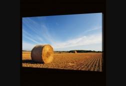 Wheat Bale